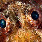 Scorpionfish eyes by Imaginarium