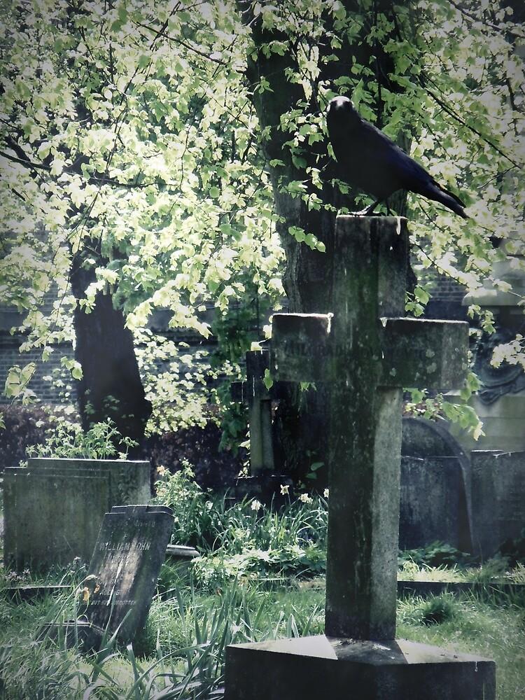 The Crow by Josephine Pugh