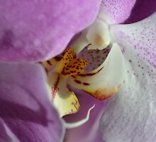 Orchid Hide and Seek by mjparsons