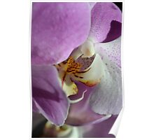 Orchid Hide and Seek Poster