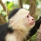 Contemplative Monkey by K Cassidy
