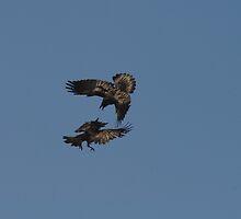 Raven scrap by Al Williscroft