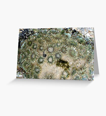 Sea Anemones by the Sea Greeting Card
