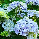 Blue Hydrangea Flowers Green Garden art Baslee Troutman by BasleeArtPrints