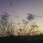 more backyard heaven. ahhhh breathe with me by Ethar Hamid