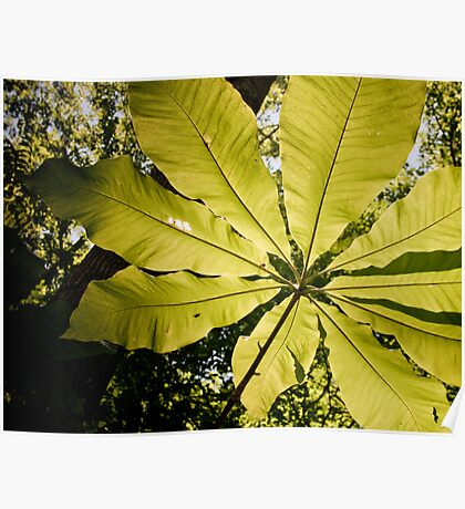 Big green plant, Old Rag, Virginia Poster