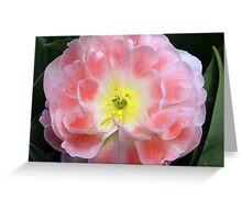 Flower Beauty Greeting Card