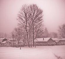 Canadian Winter Gloom by Cristian Bodnari