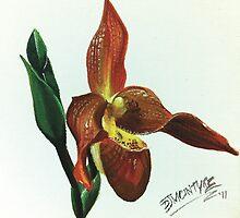 Red Slipper Orchid by debbiemc
