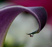 Just A Drop Of Spring by TeresaB