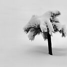 Little Tree Shake Off Your Burden by Barb Miller