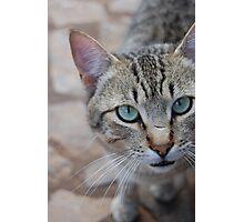Orphanage's Cat Photographic Print