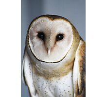 "Barn Owl - ""Casper"" Photographic Print"