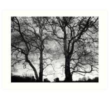 Loomis Trees  Art Print