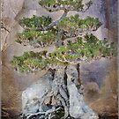 Bonsai by Rozalia Toth