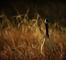 Sentinel by KatsEyePhoto