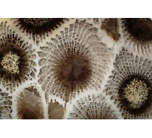Looking Into a Petoskey Stone Photographic Print