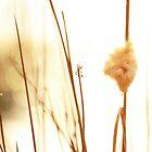 Rush by KatsEyePhoto