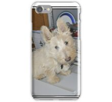 Scottish Wheaten Puppy - Dishwashing Buddy iPhone Case/Skin