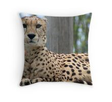 Restful Cheetah Throw Pillow