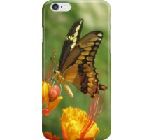Giant Swallowtail Butterfly on Red Bird of Paradise Bloom iPhone Case/Skin