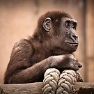 contemplating by Lisa  Kenny