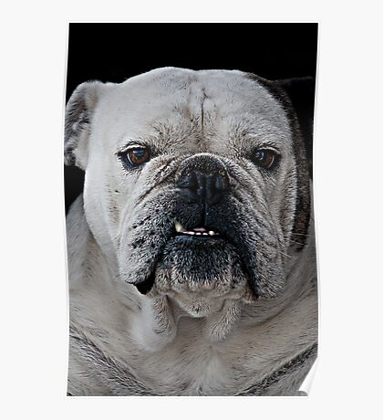 Mad Max - Cute Bulldog with grumpy face Poster