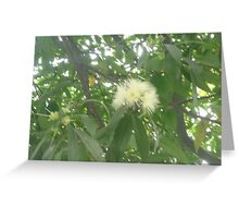 Tiny puffy flowers exploding through trees Greeting Card