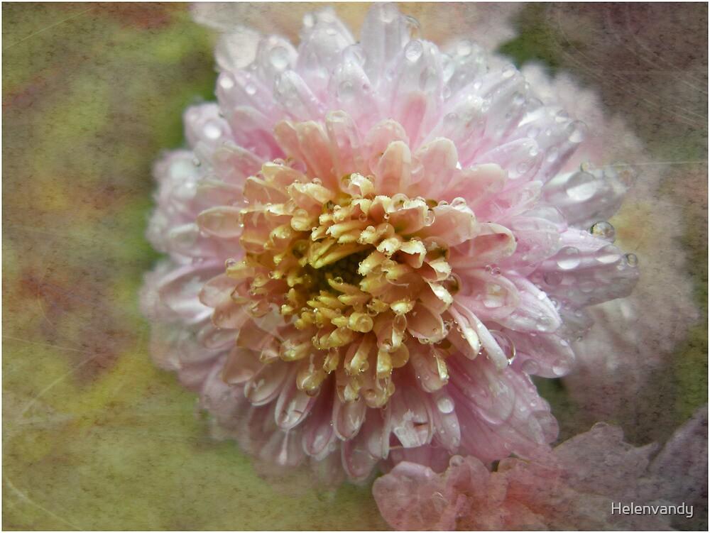 chrysanthemum by Helenvandy