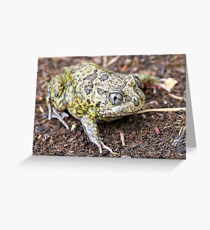 Common Spadefoot Greeting Card