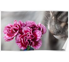 Curiosity - Maine Coon cat and flower no2 Poster