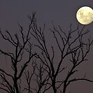 Reach for the moon by John Vandeven