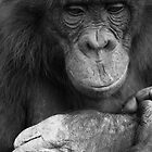 Chimpanzee in thought by Suzy Harrison