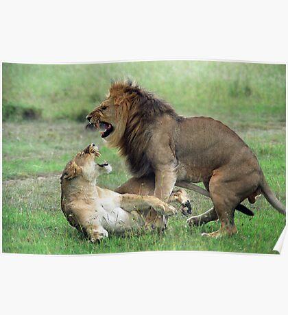 Maasai Mara Lions Poster