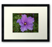 """""""Full Bloom"""" Framed Print"""