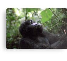 Gorilla in Bwindi, Uganda Metal Print