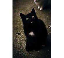 Black Cat Smile Photographic Print