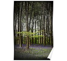 Micheldever bluebell woods Poster