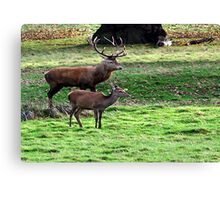 Alone Together at Last  (Red Deer) Canvas Print