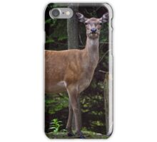 Red Deer Doe And Fawn iPhone Case/Skin