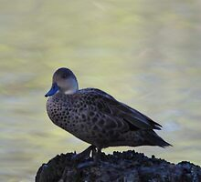 Cute little duck perched on a log by imaginethis