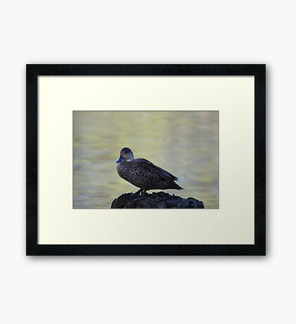 Little duck perched on a log Framed Print