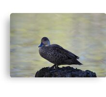 Cute little duck perched on a log Canvas Print
