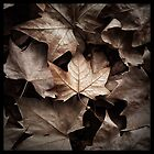 Hyde Park Leaves by charlescollins8