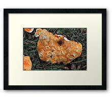 Broken Mushroom Framed Print