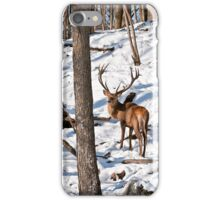 Red Deer in Forest iPhone Case/Skin