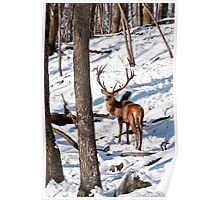 Red Deer in Forest Poster