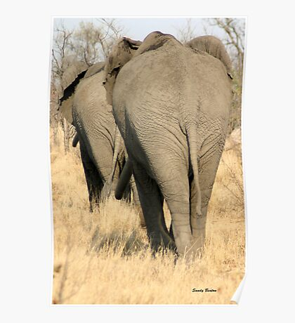 """""""He's not heavy, he's my brother"""" - African elephant - Kruger National park Poster"""
