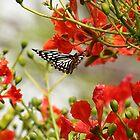 A butterfly amidst mayflower. by debjyotinayak
