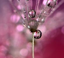 Pink Champagne Sparkle by Sharon Johnstone